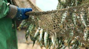 Fish Nets